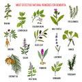 Best herbal remedies for dementia