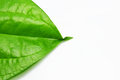 Betel leave Royalty Free Stock Photo
