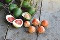 Betel nut or areca nut Royalty Free Stock Photo