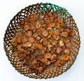 Betel Nuts Stock Photo