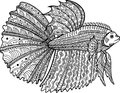 Betta fish hand drawn coloring page Royalty Free Stock Photo