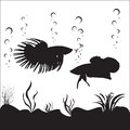 Betta fishes vector image of and an underwater environment Stock Photo