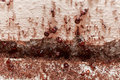 Beware crowd big ant they lived in the home Royalty Free Stock Photos