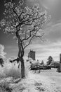 Bewildering black and white infrared a monochrome phote taken in light showing a scene of a tree in the foreground with shimmering Royalty Free Stock Photography