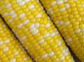 Bi-Color Corn Royalty Free Stock Image