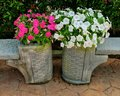 Biała różowa petunia Zdjęcia Royalty Free