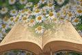 Bible in daisy field Royalty Free Stock Photo