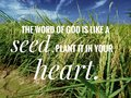 Seed of God of words from the bible verse of the day, be encouraged in daily life design for Christianity.