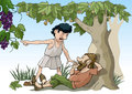 Biblical parable vector illustration of the of the grape pickers Stock Images