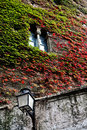 Bicolor ivy medieval window in old house hidden in green and red caceres spain Royalty Free Stock Images