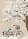 Bicycle and Blooming Tree Stock Photo