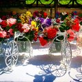 Bicycle colorful roses in the Royalty Free Stock Photos