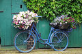 Stock Images Bicycle with flowers