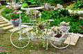 Bicycle in flowers cluster beautiful Royalty Free Stock Photography