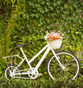 Bicycle in the garden with flower Stock Photo