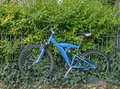 Bicycle with ivy abandoned blue padlocked to railing overgrown by and other plants Stock Photography