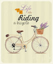 Bicycle with lavender in basket poster in vintage style vector illustration card retro hand drawing Stock Photos