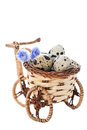 Bicycle pot with quail eggs Royalty Free Stock Photography