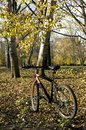 Bicycle recreational riding in a city park healthy autumn ride Stock Image
