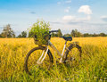 Bicycle in the rice field golden Stock Photo
