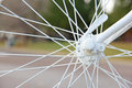 Bicycle Spokes Connected to Axle