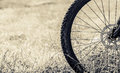 Bicycle wheel in the field closeup Stock Photo