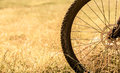 Bicycle wheel in the field closeup Stock Photography