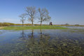 Biebrza marshes and floodwaters in spring Royalty Free Stock Photography
