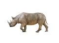 Big african Rhino, Rhinoceros