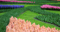 The big amount of the purple blue pink hyacinths Royalty Free Stock Photo