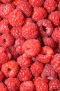 Big amount of raspberries Royalty Free Stock Image