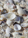 The big amount of shells laying in the sand macro shot white Royalty Free Stock Photos