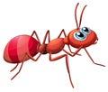 A big ant crawling Royalty Free Stock Photo