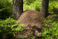 The big ant hill Royalty Free Stock Images
