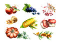 Big Autumn harvest set. Watercolor illustration