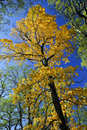 Big autumn tree in fall park Royalty Free Stock Image