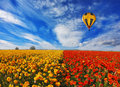 Big balloon flies over field of flowering Royalty Free Stock Photo