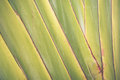 Big banana leaf texture background Royalty Free Stock Photo