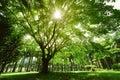 Photo : A big banyan tree buddha image