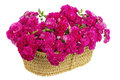 Big basket with huge bouquet of pink roses Royalty Free Stock Images