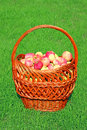 Big basket with red apples the on a background of green grass Stock Photo