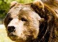 Big Bear Foto de archivo
