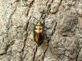 Beetle bug on tree Royalty Free Stock Photo