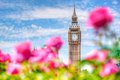 Big Ben,, London UK. View from a public garden with beautiful roses flowers. Royalty Free Stock Photo