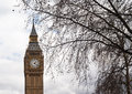 Big ben met boom in londen Royalty-vrije Stock Fotografie