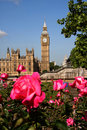 Big Ben with roses, London, UK Royalty Free Stock Image