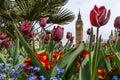 Big Ben In Spring
