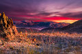 Big bend sunset stunning in national park featuring bright orange ocotillo blooms in the foreground Royalty Free Stock Photos