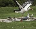 Big Bird Zoo