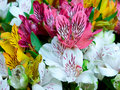 Big bouquet of alstroemeria flowers Stock Images